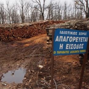 Με παράνομες άδειες συνεχίζει την καταστροφή του δάσους στις Σκουριές η «ΕλληνικόςΧρυσός»